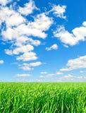 Fond - été, nature, verticalement. Image stock