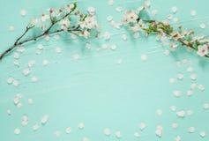 Fond étonnant avec les fleurs de cerisier blanches images libres de droits