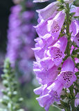 Fond étonnant de fleur au festival de fleurs Photos libres de droits