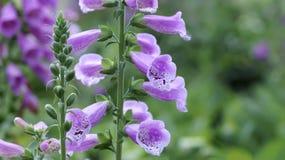Fond étonnant de fleur au festival de fleurs Images stock