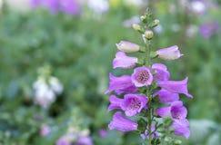 Fond étonnant de fleur au festival de fleurs Image stock