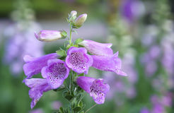 Fond étonnant de fleur au festival de fleurs Image libre de droits