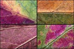 Fond étroit de la texture de feuilles d'automne Photographie stock