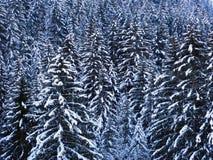 Fond 01 de l'hiver Image libre de droits
