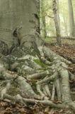 Fond 1 d'arbre Image libre de droits