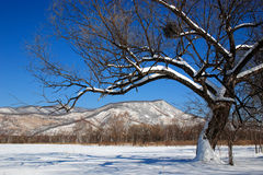 Fond 2 de l'hiver Photo stock
