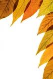 Fond 3 d'automne Photos libres de droits