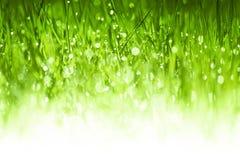 Fond abondant d'herbe verte Photos libres de droits