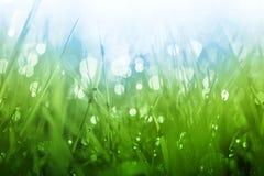 Fond abondant d'herbe verte Photos stock