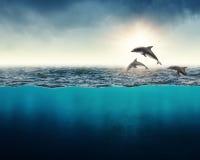 Fond abstrait avec des dauphins Image libre de droits