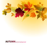 Fond abstrait avec des lames d'automne Images stock