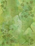 Fond abstrait avec des lames de Ginkgo en vert Photo stock