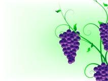 Fond abstrait avec des vignes Images libres de droits