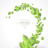 Fond abstrait avec les lames vertes Photos stock