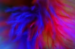 Fond abstrait coloré de plumes Image libre de droits