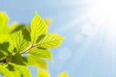 Fond abstrait d'été avec les lames vertes Images libres de droits