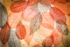 Fond abstrait d'automne