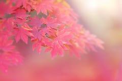 Fond abstrait d'automne Photographie stock