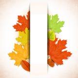 Fond abstrait d'automne avec la bande blanche pour le te Image libre de droits