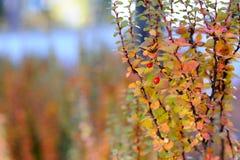 Fond abstrait d'automne avec les baies sauvages Photographie stock