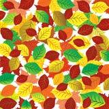 Fond abstrait d'automne Feuilles colorées Image libre de droits