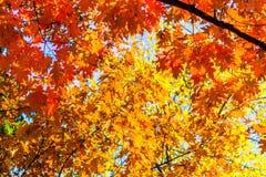 Fond abstrait d'automne, vieilles feuilles oranges, feuillage sec d'arbre, foyer mou, saison automnale, changement de la nature,  Image libre de droits