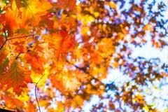 Fond abstrait d'automne, vieilles feuilles oranges, feuillage sec d'arbre, foyer mou, saison automnale, changement de la nature,  Images stock
