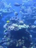 Fond abstrait d'espèce marine Image libre de droits