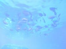 Fond abstrait d'espèce marine Image stock