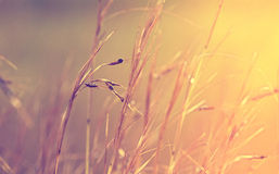 Fond abstrait d'herbe Image libre de droits