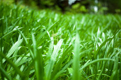 Fond abstrait d'herbe Photographie stock