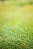 Fond abstrait d'herbe d'humidité photo libre de droits