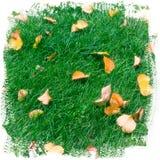 Fond abstrait d'herbe verte et de lames d'automne jaunes Photo stock