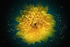 Fond abstrait de fleur Images libres de droits
