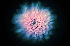 Fond abstrait de fleur Photos libres de droits