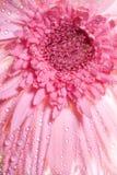 Fond abstrait de fleur Photographie stock libre de droits