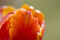 Fond abstrait de fleur Images stock