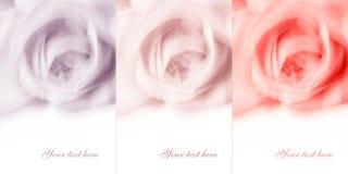 Fond abstrait de fleur avec l'espace blanc vide Photographie stock libre de droits