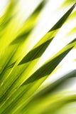 Fond abstrait de forêt Images libres de droits