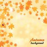 Fond abstrait de jaune d'automne avec des feuilles d'érable illustration libre de droits
