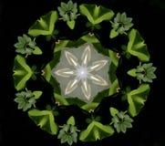Fond abstrait de kaléidoscope Belle texture multicolore de kaléidoscope Conception unique et inimitable Symétrique géométrique images stock