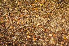 Fond abstrait de l'eau ondulée au-dessus des feuilles et des pierres colorées Images libres de droits