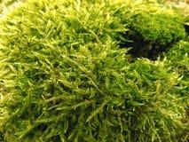 Fond abstrait de mousse de vert forêt Papier peint de paysage de nature Images stock