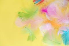 Fond abstrait de plumes Le fond pour la conception avec le colorfull mou fait varier le pas du modèle Plumes pelucheuses molles d Images libres de droits