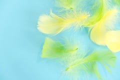 Fond abstrait de plumes Le fond pour la conception avec le colorfull mou fait varier le pas du modèle Plumes pelucheuses molles d Photographie stock libre de droits