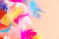 Fond abstrait de plumes Le fond pour la conception avec le colorfull mou fait varier le pas du modèle Plumes pelucheuses molles s Photographie stock libre de droits