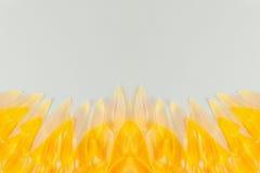 Fond abstrait de ressort avec les pétales jaunes de fleur Fond Image libre de droits