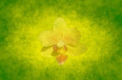 Fond abstrait de source avec l'orchidée Photos stock