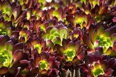 Fond abstrait des fleurs Photo libre de droits