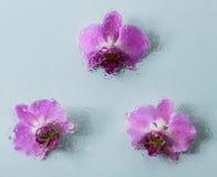 Fond abstrait des fleurs Image stock